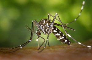mosquito pest control in Sydney